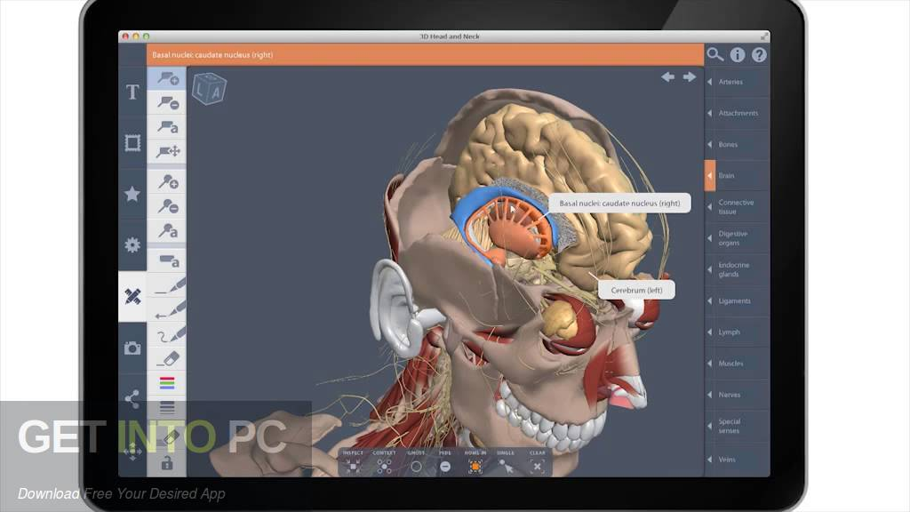 Full interactive series of human anatomy Primal 3D Latest version Download-GetintoPC.com