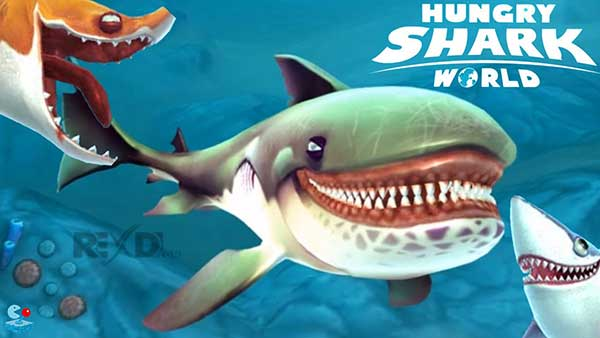 The hungry world of sharks